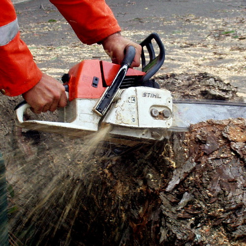Chainsaw Work Port Elizabeth