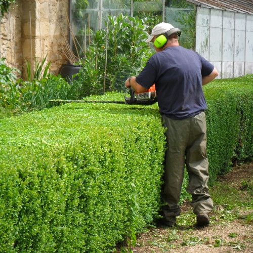 Hedge Trimming Port Elizabeth