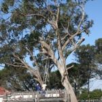 Tree Felling Port Elizabeth